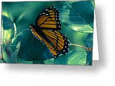 Viceroy Greeting Card