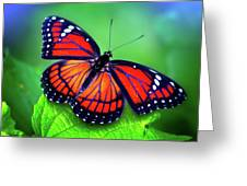 Viceroy Perch Greeting Card