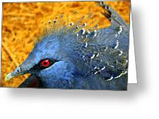 Victoria Crowned Pigeon Close Up Greeting Card