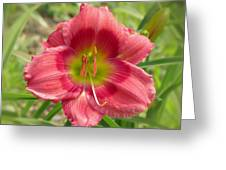 Victoria Grace Daylily Greeting Card
