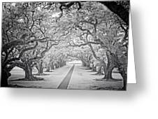 View Down Oak Alley Greeting Card
