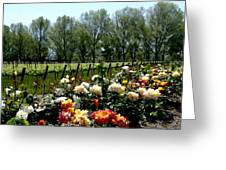 View From Bridlewood Vineyards Greeting Card