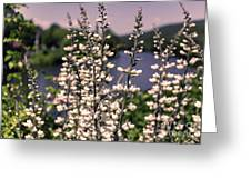 View From The Bridge Of Flowers Greeting Card