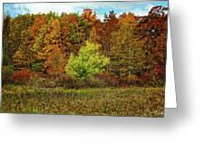 View From The Meadow Greeting Card