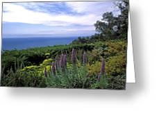 View From Ventana Big Sur Greeting Card by Kathy Yates