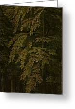 View In A Forest  Outer Right Wing Of A Triptych  Gerard David  C  1505   C  1515 Greeting Card