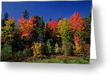 View In The Appalachian Mountains Greeting Card