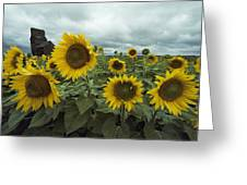 View Of A Field Of Sunflowers Greeting Card