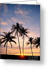 View Of Palms Greeting Card