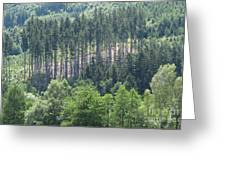 View Of The Mixed Forest Greeting Card