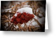 Vignettes - First Snow 1 Greeting Card