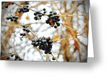 Vignettes - Indigo Winter Berries Greeting Card
