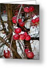 Vignettes - Snow Fruit Greeting Card