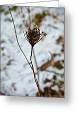 Vignettes - Snow Thistle Greeting Card