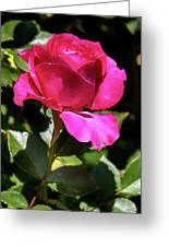 Vincent Red Rose Greeting Card