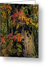Vine And Hickory Greeting Card