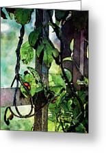 Vine And Trellis Digital Watercolor 4472 W_2 Greeting Card