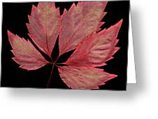 Vine Leaf Greeting Card