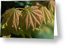 Vine Maple Leaves Greeting Card