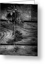Vine On Barn Greeting Card