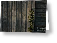 Vine On Wood Greeting Card