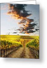 Vineard Aglow Greeting Card