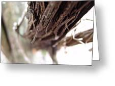 Vines 006 Greeting Card