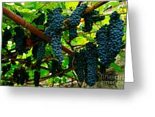 Vines Greeting Card