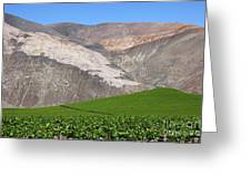 Vineyards In The Atacama Desert Chile Greeting Card