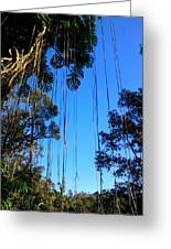 Vines In The Sky Greeting Card