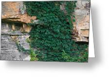 Vines On The Rocks Greeting Card