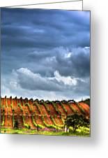 Vineyard 01 Greeting Card
