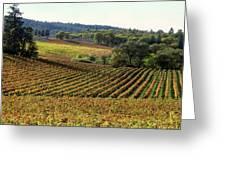 Vineyard 22 Greeting Card