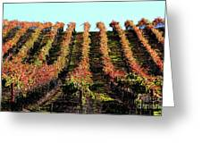Vineyard 27 Greeting Card