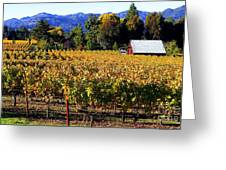 Vineyard 4 Greeting Card
