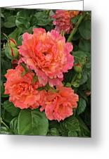 Vineyard Flowers  Greeting Card