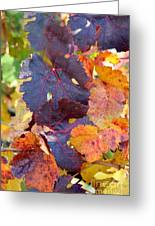 Vineyard In Autumn Greeting Card