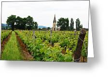 Vineyard In France Greeting Card