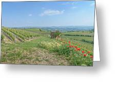 Vineyard In Italy Greeting Card