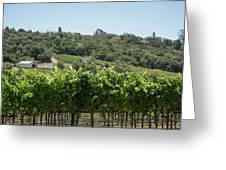 Vineyard In Sebastopol, Sonoma, California Greeting Card