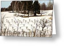 Vineyard In The North Greeting Card