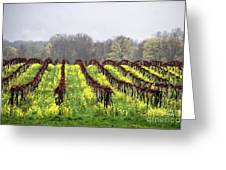 Vineyard In Westfield Greeting Card