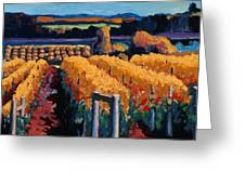 Vineyard Light Greeting Card by Christopher Mize