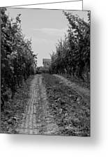 vineyard of old BW Greeting Card