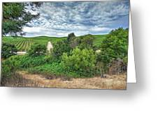 Vineyard On Cloudy Day Greeting Card