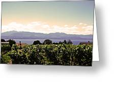 Vineyard On Lake Geneva Greeting Card