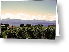 Vineyard On Lake Geneva Greeting Card