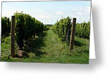 Vineyard On The Peninsula Greeting Card