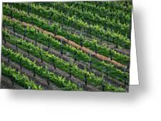 Vineyard Rows - Slovenia Greeting Card