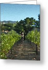 Vineyard Sauvignon Blanc Grapes Greeting Card